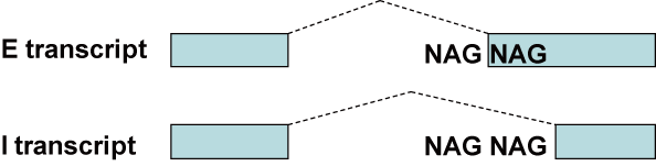 Abbreviation For Invitational Best Custom Invitation Template